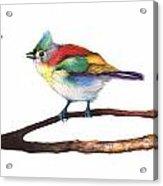 Color Birds Study 3 Acrylic Print