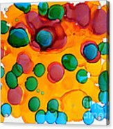 Color Bubbles Acrylic Print