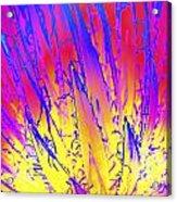 Color Burst Agave Acrylic Print
