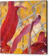 Color Containment  Acrylic Print