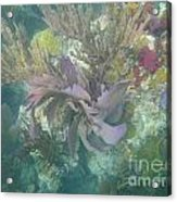 Color Corals Acrylic Print by Adam Jewell