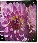 Color Explosion Acrylic Print