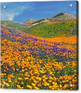 Color Filled Hills Acrylic Print