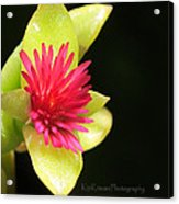 Flower - Delicate As Life Acrylic Print