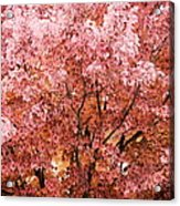 Color In The Tree 03 Acrylic Print