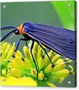 Color Me Blue Acrylic Print