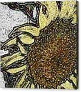 Color Me Sunflower Acrylic Print