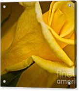 Color Of Friendship Acrylic Print