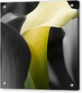Color On Black And White Acrylic Print