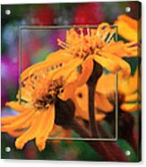 Color Pizzaz With Collaged Textures Acrylic Print
