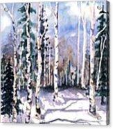 Colorado Aspens 2  Acrylic Print