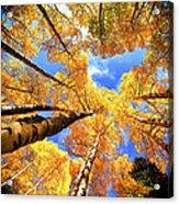 Colorado Autumn Sky Acrylic Print