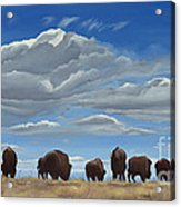 Colorado Bison Moving On Acrylic Print