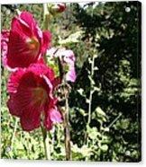 Colorado Wildflower Acrylic Print