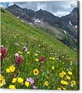 Colorado Wildflowers And Mountains Acrylic Print