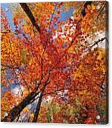 Colored Leaves Ground To Sky Acrylic Print