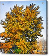 Colored Leaves On The Autumn Forest Acrylic Print