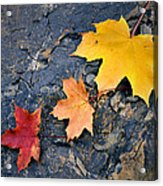 Colored Maple Leaf On Stone Acrylic Print