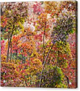 Colored Pallet Smoke Trees Acrylic Print
