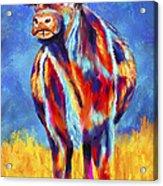 Colorful Angus Cow Acrylic Print