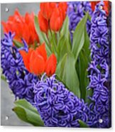 Colorful Arrangement Acrylic Print
