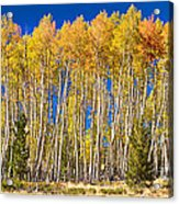 Colorful Aspen Panorama Acrylic Print