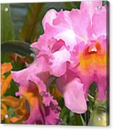 Colorful Assorted Cattleya Orchids Acrylic Print