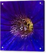 Colorful Attraction Acrylic Print by Michael Sokalski