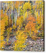 Colorful Autumn Forest In The Canyon Of Cottonwood Pass Acrylic Print