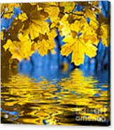 Colorful Autumn Leaves Acrylic Print by Boon Mee