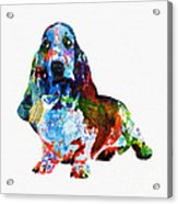 Colorful Basset Acrylic Print