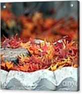 Colorful Bird Bath Acrylic Print