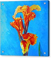 Colorful Canna Acrylic Print