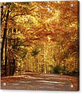 Colorful Canopy Acrylic Print by Sandy Keeton