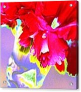 Colorful Carnation Acrylic Print