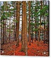 Colorful Carolina Forest Acrylic Print