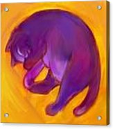 Colorful Cat 5 Acrylic Print