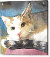Colorful Cat Watercolor Portrait Acrylic Print