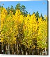 Colorful Colorado 2 Acrylic Print
