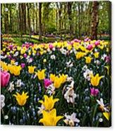 Colorful Corner Of The Keukenhof Garden 1. Tulips Display. Netherlands Acrylic Print