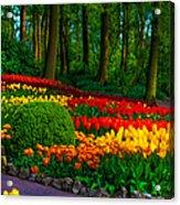 Colorful Corner Of The Keukenhof Garden 4. Tulips Display. Netherlands Acrylic Print