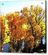 Colorful Cottonwoods Acrylic Print