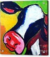 Colorful Cow Acrylic Print