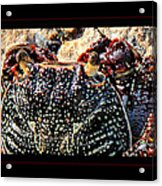Colorful Crab Acrylic Print
