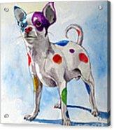 Colorful Dalmatian Chihuahua Acrylic Print