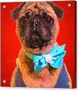 Colorful Dapper Pug Acrylic Print