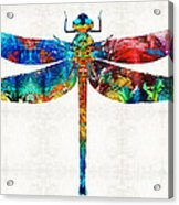 Colorful Dragonfly Art By Sharon Cummings Acrylic Print