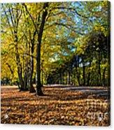 Colorful Fall Autumn Park Acrylic Print
