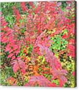 Colorful Fall Leaves Autumn Crepe Myrtle Acrylic Print