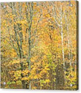 Colorful Fall Trees In Maine Acrylic Print